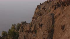 Gelada baboons group, kids climbing in a steep cliff, 60 fps