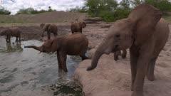 Herd of wild elephants at a waterhole, wide handheld close shot
