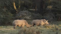Group of rhinos meeting in green forest