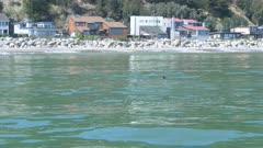 White Shark Swimming Santa Cruz California Finning Fin at Surface