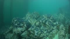 Sea Urchin Barren