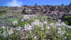 Video 4K - Flowering Desert 2017