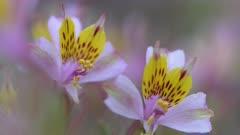 Video 4K - Flowering Desert 2017 - 0094