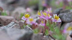 Video 4K - Flowering Desert 2017 - 0095