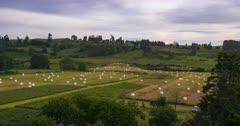 Aerial Drone 4K - Lavender Field