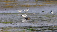 Birds in a wetland, mostly seagulls