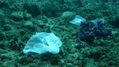 Plastic bags on a reef with purple soft corals