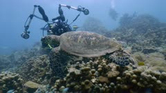 Hawksbill sea turtle (Eretmochelys imbricata) swimming over coral reef with underwater photographer