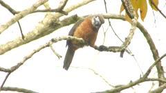 nunbird