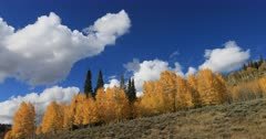 Mountain ridge autumn aspen trees clouds. Beautiful season Autumn fall colors in Aspen, Oak and Pine forest. Wasatch Mountains in Manti La Sal Forest central Utah. Golden yellow, golden, red and orange  leaves. Exploring natural landscape before winter. Early winter snow seasonal weather. Nature and creations of Earth. 4K UHD HD video footage. Despain Rekindle Photo. 686