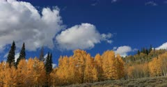 Autumn mountain Aspen forest clouds time lapse. Beautiful season Autumn fall colors in Aspen, Oak and Pine forest. Wasatch Mountains in Manti La Sal Forest central Utah. Golden yellow, golden, red and orange  leaves. Exploring natural landscape before winter. Early winter snow seasonal weather. Nature and creations of Earth. 4K UHD HD video footage. Despain Rekindle Photo. 687