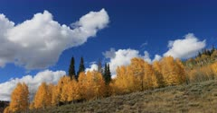 Mountain ridge autumn aspen trees clouds time lapse. Beautiful season Autumn fall colors in Aspen, Oak and Pine forest. Wasatch Mountains in Manti La Sal Forest central Utah. Golden yellow, golden, red and orange  leaves. Exploring natural landscape before winter. Early winter snow seasonal weather. Nature and creations of Earth. 4K UHD HD video footage. Despain Rekindle Photo. 686