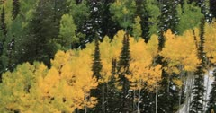 Drone flys over beautiful Autumn colorful mountain forest aerial. Beautiful season Autumn fall colors in Aspen, Oak and Pine forest. Wasatch Mountains in Manti La Sal Forest central Utah. Golden yellow, golden, red and orange  leaves. Exploring natural landscape before winter. Early winter snow seasonal weather. Nature and creations of Earth. 4K UHD HD video footage. Despain Rekindle Photo. 483