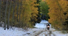 Motorcycle mountain road snow autumn colors 3. Beautiful autumn fall colors in Wasatch Mountains. Rural dirt road through hills to canyon. Aspen, maple and oak trees colorful leaves change as winter starts to set in. DCI 4K HD video footage. Despain Rekindle Photo. 498