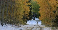 Mountain road snow autumn forest recreation off road towards. Enjoy beauty of seasonal Autumn colors early winter snow, exploring high mountain roads and trails. Riding sports utility vehicle UTV side by side 4x4 4 wheel drive ATV high mountain and valley. Fall colors, beautiful nature before winter sets in. Great outdoors and landscape. Forest Aspen and pine trees. Exploring. Popular travel and sport drive in central Utah. 4K HD footage video. Despain Rekindle Photo. 490