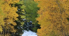 Mountain snow beautiful autumn fall leaves fast. Beautiful season Autumn fall colors in Aspen, Oak and Pine forest. Wasatch Mountains in Manti La Sal Forest central Utah. Golden yellow, golden, red and orange  leaves. Exploring natural landscape before winter. Early winter snow seasonal weather. Nature and creations of Earth. 4K UHD HD video footage. Despain Rekindle Photo. 499
