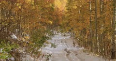 Mountain trail snow beautiful yellow Aspen forest. Beautiful season Autumn fall colors in Aspen, Oak and Pine forest. Wasatch Mountains in Manti La Sal Forest central Utah. Golden yellow, golden, red and orange  leaves. Exploring natural landscape before winter. Early winter snow seasonal weather. Nature and creations of Earth. 4K UHD HD video footage. Despain Rekindle Photo. 520