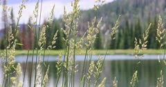 Mountain lake grass on shore landscape. Scenic high mountain lake used for recreation, canoe and fishing. Campgrounds on shore. Couples and families enjoy the great outdoors and nature. Pine and aspen forest. Calm and relaxing pleasure. 4K HD video footage. Despain Rekindle Photo. 1226