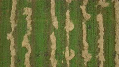 Aerial farm cut alfalfa hay in field green overhead 4K 049. Aerial rural farming community agricultural economy. Spring summer weather mountain valley green agriculture field. Seasonal rural farm harvest. Alfalfa hay for livestock feeding. Drone flight. 4K HD video footage. Despain Rekindle Photo.
