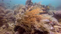 Coral reef outside the island of Mindoro in the Philippines