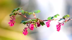 Spring flowers on a tree branch with a blurry waterfall in the background