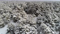 Snow Covered Evergreen Forest, aerial