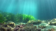 Natural sunlight underwater with some seagrass on the seabed, Mediterranean sea, France