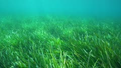 Moving above a grassy seabed (seagrass Posidonia oceanica) underwater in Mediterranean sea, French Riviera, Port-Cros, Var, France