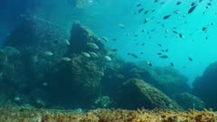 Underwater seascape, rocks on the seabed with shoal of fishes in the Mediterranean sea, natural light, Cote d'Azur, France