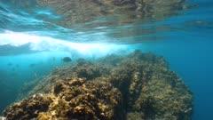 Underwater sea waves breaking on rock with seabreams fish below water surface, Mediterranean, France