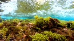 Algae underwater and small wave on the sea shore, Mediterranean, Spain, Costa Brava, Catalonia