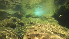 Underwater a rocky stream with small freshwater fish Eurasian minnow, Phoxinus phoxinus, La Muga river, Girona, Alt Emporda, Catalonia, Spain