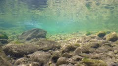 Freshwater fish and rocks underwater in a river with clear water, Spain, La Muga, Catalonia
