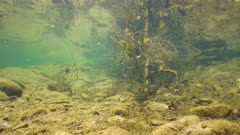 River underwater with a school of freshwater fish, Spain, La Muga, Catalonia