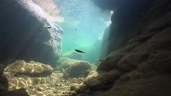 Underwater landscape, rocks with minnow fish in a river with clear water, natural light, Spain, La Muga, Catalonia