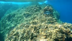 Mediterranean sea, seabreams fish underwater and rocky coastline, camera moves over and under water surface, France, marine reserve of Cerbere Banyuls, Pyrenees Orientales, Occitanie
