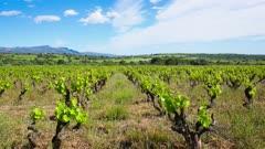 Spain vineyard field landscape time-lapse in Catalonia near Mollet de Peralada, Alt Emporda, Girona province