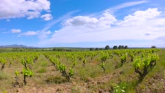 Vineyard field and clouds landscape time-lapse in Spain near Mollet de Peralada, Catalonia, Alt Emporda, Girona province