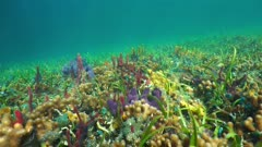 Sunlight on a colorful seabed with sea sponges, corals and fish in the Caribbean sea, Central america, Panama