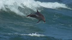 Aerial Slow Motion, Dolphin Leaps Riding Waves