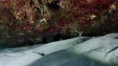 baby leafy sea dragon