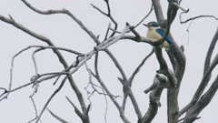 Forest Kingfisher perched on a branch