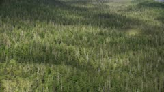 7k and 8k aerial of lush temperate rain forest in Tongass National Forest, Southeast Alaska