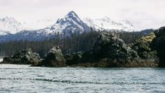 Kittiwake gulls flying and nesting near a rocky island in Alaska; Common Murres swim in Kachemak Bay