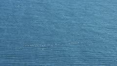 Flock of birds, possibly Seabirds, flying over Hallo Bay, Katmai National Park, Alaska
