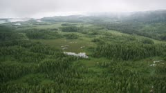 Scenic view of the forest and tundra near Prince William Sound, Alaska