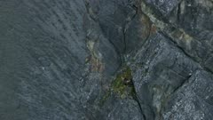 Aerial of a Golden Eagle perched on a rugged mountain in the Arctic National Wildlife Refuge
