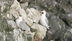 Seagulls perched on a rock  at Kachemak Bay, Alaska
