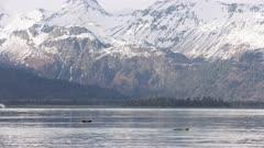 Sea Otters and Seagulls in Kachemak Bay, Alaska
