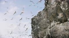 Seagulls flocking around a cliff at Kachemak Bay, Alaska